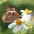 Butterfly 39 by Michelle Powell