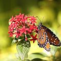 Butterfly 4 by Craig  Vargas