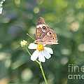 Butterfly 42 by Michelle Powell