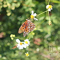 Butterfly 46 by Michelle Powell