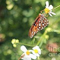 Butterfly 47 by Michelle Powell