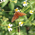 Butterfly 48 by Michelle Powell
