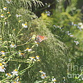 Butterfly 50 by Michelle Powell