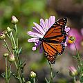 Butterfly 89 by Joyce StJames