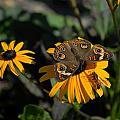 Butterfly 90 by Joyce StJames