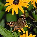 Butterfly 94 by Joyce StJames