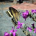 Butterfly by Afroditi Katsikis