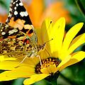 Butterfly by Ahmed Moustafa