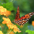 Butterfly by Amy Salter