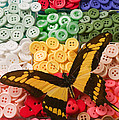 Butterfly And Buttons by Garry Gay