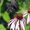 Butterfly And Coine Flower by Marty Koch