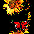 Butterfly And Sunflower by Steve McKinzie