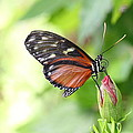 Butterfly At Rest by Mark Heywood