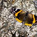 Butterfly Bark by LeeAnn McLaneGoetz McLaneGoetzStudioLLCcom