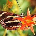 Butterfly Beauty by Phil Huettner