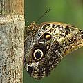 Butterfly by Bilderbuch