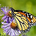 Butterfly Blessing by Diane E Berry