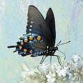 Butterfly Candy by Betty LaRue