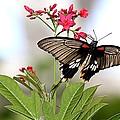 Butterfly Candy by Elizabeth Winter