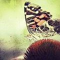 Butterfly by Christy Bruna