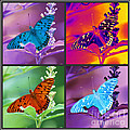 Butterfly Collage by Donna Bentley