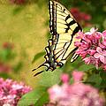Butterfly by Darren Fisher