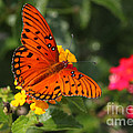 Butterfly Diaries IIi by Suzanne Gaff