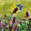 Butterfly Dreams by Debbie Portwood