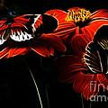 Butterfly Duet by Darleen Stry
