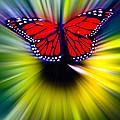 Butterfly Fly by Steve McKinzie