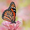 Butterfly Garden IIi by Regina Geoghan