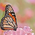 Butterfly Garden Iv by Regina Geoghan