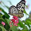 Butterfly Glow by Marty Koch