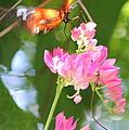 Butterfly II by Sarah  Ellis