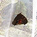Butterfly In Network by Yury Bashkin