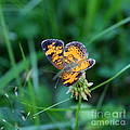 Butterfly In Square  by Neal Eslinger