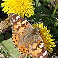 Butterfly In The Sun by Mark J Seefeldt