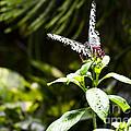 Butterfly Kisses by Leslie Leda