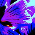 Butterfly by Konstantine Bak