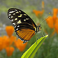 Butterfly Landing by Beverly Hanson