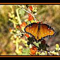 Butterfly by Larry White