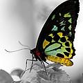 Butterfly Leaves by Elizabeth Winter