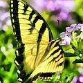 Butterfly by Lynne Jenkins