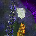Butterfly Magic by Maggie Magee Molino