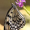 Butterfly On A Stem by Craig  Vargas
