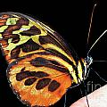 Butterfly On Finger by Thomas R Fletcher