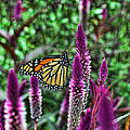 Butterfly On Flower by Ron Hall