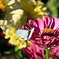 Butterfly On Flower by Steve McKinzie