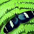Butterfly On Leaf. by Kryssia Campos