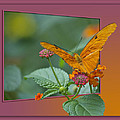 Butterfly Orange 16 By 20 by Thomas Woolworth
